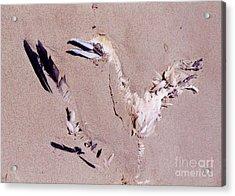 Fading Away Acrylic Print by John Malone