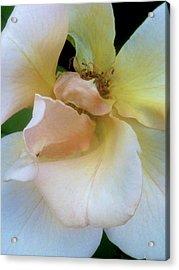 Fading Blossom Acrylic Print