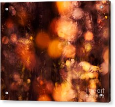 Fading Fall Flame Acrylic Print by Royce Howland