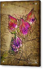 Faerie Caps Acrylic Print by Judi Bagwell