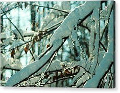 Faery Forest Acrylic Print by Rebecca Sherman
