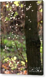Fairies Acrylic Print