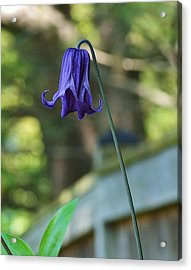Fairy Bell Acrylic Print by Mary Zeman