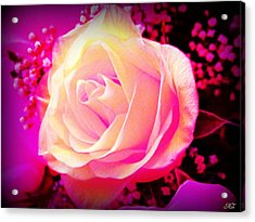 Acrylic Print featuring the photograph Fairy Rose by Michelle Frizzell-Thompson