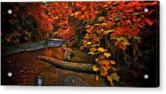 Fall Along The Creek Acrylic Print