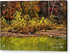 Fall Along West Fork River Acrylic Print by Thomas R Fletcher