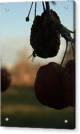 Fall Apples Acrylic Print