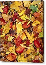 Fall  Autumn Leaves Acrylic Print