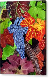 Fall Cabernet Sauvignon Grapes Acrylic Print by Mike Robles