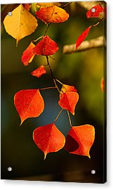 Acrylic Print featuring the photograph Fall Color 2 by Dan Wells
