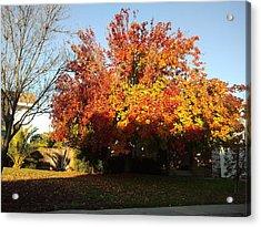 Fall Color 4 Acrylic Print by Remegio Onia