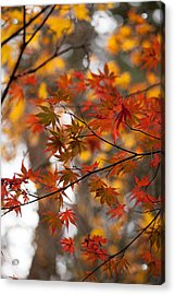 Fall Color Montage Acrylic Print by Mike Reid