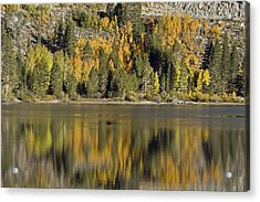 Fall Color Reflection And Tree Acrylic Print by Rich Reid