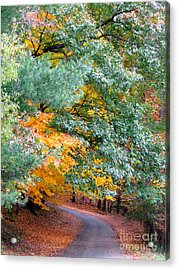 Fall Colored Country Road Acrylic Print
