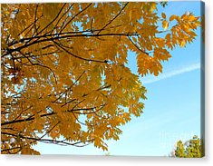 Fall Colors 111 Acrylic Print by Pamela Walrath