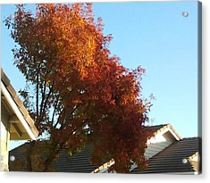 Fall Colors 4 Acrylic Print by Remegio Onia