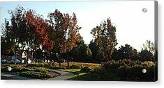 Fall Colors 5 Acrylic Print by Remegio Onia