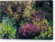 Acrylic Print featuring the photograph Fall Colors Alaska by Gary Rose