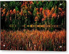 Fall Colors Acrylic Print by Andre Faubert