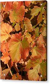 Fall Colors Acrylic Print by Diane Bohna