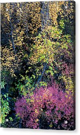 Acrylic Print featuring the photograph Fall Colors by Gary Rose