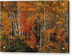 Fall Colors Grand Mesa Acrylic Print by Ernie Echols