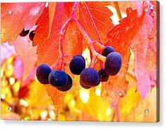 Fall Colors Acrylic Print by Marilyn Magee