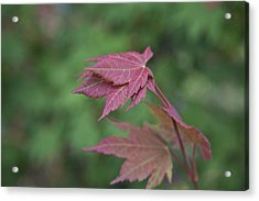 Fall Colors Acrylic Print by Molly Heng