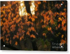 Acrylic Print featuring the photograph Fall Colours by Art Whitton