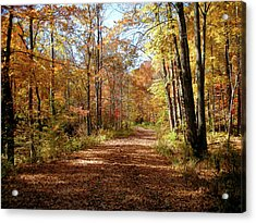 Acrylic Print featuring the photograph Fall Coming On by Paul Mashburn