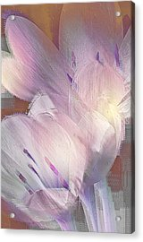 Fall Crocus Acrylic Print by Jill Balsam