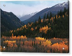 Fall Denali National Park Acrylic Print
