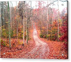 Acrylic Print featuring the photograph Fall Drive by Gretchen Allen