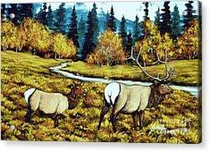 Fall Elk Acrylic Print by Bobbylee Farrier