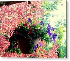 Fall Flowers Acrylic Print by Amy Bradley