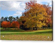 Fall Foliage Acrylic Print by Lisa Phillips