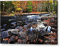 Fall Forest And River Landscape Acrylic Print by Elena Elisseeva
