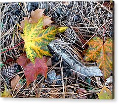 Fall Forest Floor Acrylic Print by Will Borden
