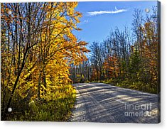 Fall Forest Road Acrylic Print