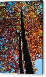 Fall From Above Acrylic Print by David Patterson