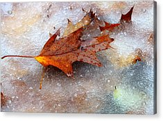 Fall Frost Acrylic Print by Patrice Zinck