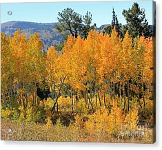 Fall Gathering  Acrylic Print