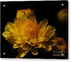 Fall Gold Acrylic Print by Aubrey Campbell