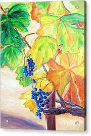 Fall Grapes Acrylic Print by Barbara Anna Knauf