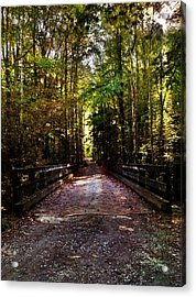 Fall Hiking Trail Acrylic Print by Janice Spivey
