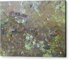 Fall Impressions Acrylic Print by Heather Burbridge