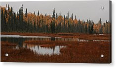 Fall In Alaska Acrylic Print