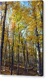 Fall In The Forest 2 Acrylic Print by Marty Koch