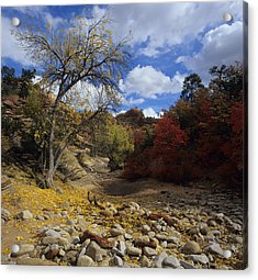 Fall In Zion High Country Acrylic Print