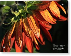 Fall Is On Its Way Acrylic Print by Marjorie Imbeau